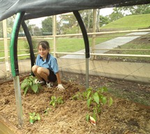 3/M and 4/5W Vegetable Garden